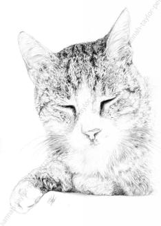 11. Hannah Taylor Pet Portraits cat