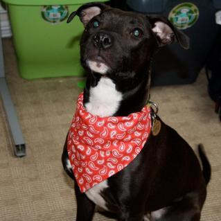 14. Celery Crafts dog bandana
