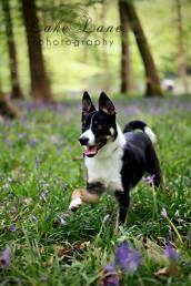 7. Lake Lane Photography dog